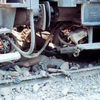 Il corpo senza vita di una delle vittime sotto il treno in sosta al primo binario (Associazione tra i familiari delle vittime della strage della stazione di Bologna)